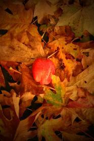 fall 083