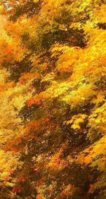 fall 095-2