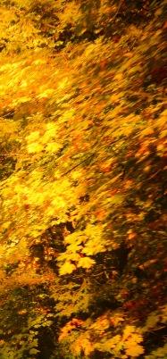 fall 095-3