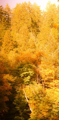 fall 095