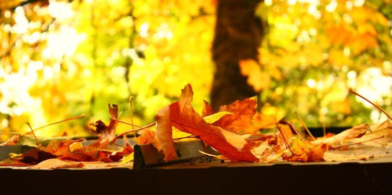 fall 105