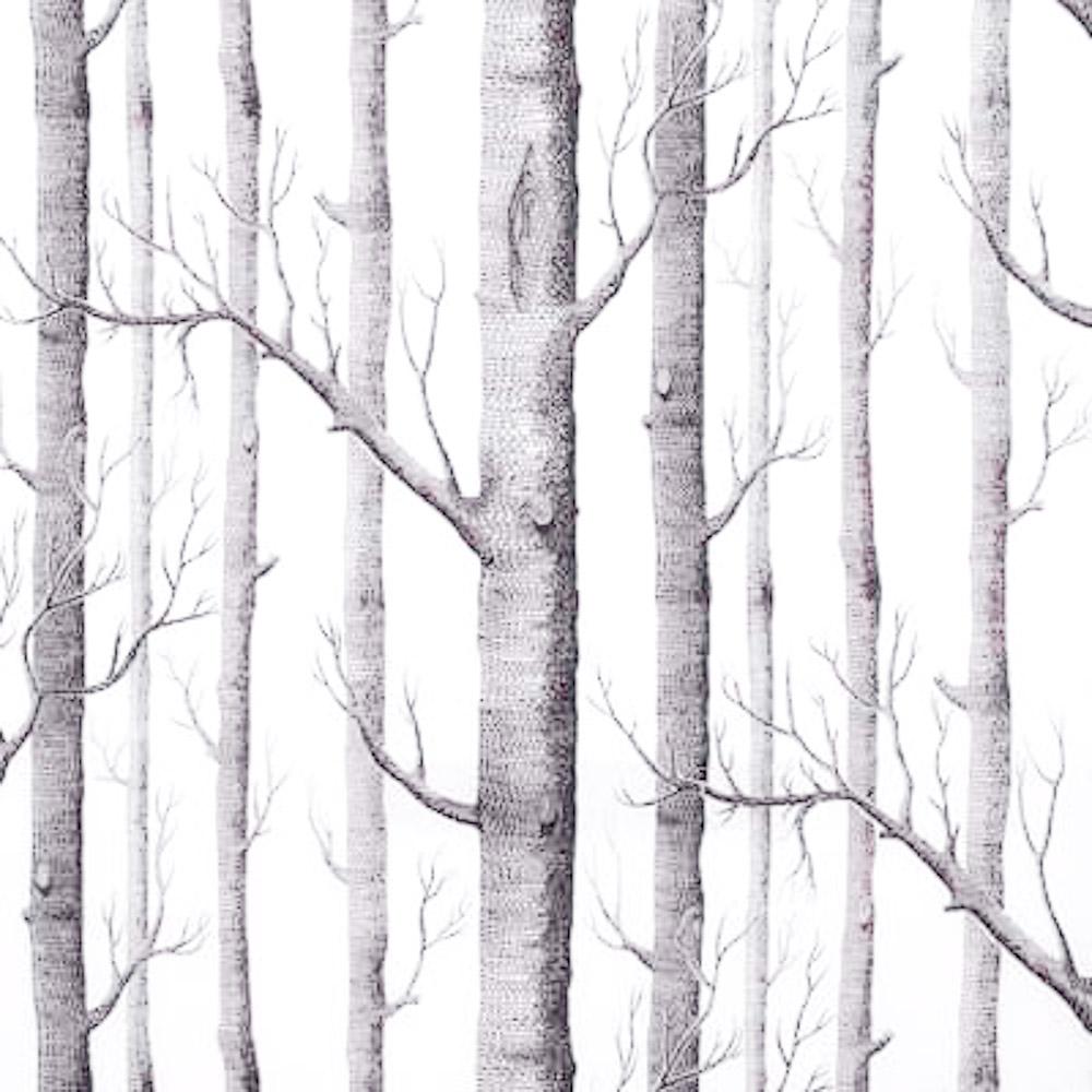 Birch Tree Wallpaper Jpg Lin Chen Photography